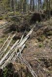 Floresta após uma tempestade imagens de stock
