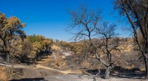 Floresta após o incêndio violento de Califórnia Fotografia de Stock Royalty Free