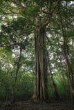 Floresta asiática Fotografia de Stock Royalty Free