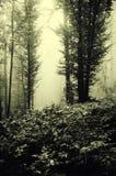 Floresta assombrada com névoa através das árvores e da vegetação estranhas Imagem de Stock