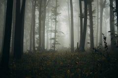 Floresta assombrada com névoa na noite de Dia das Bruxas Imagens de Stock