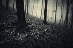 Floresta assombrada misteriosa escura com névoa Foto de Stock