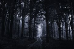 Floresta assombrada na noite com a estrada que atravessa árvores assustadores Fotografia de Stock