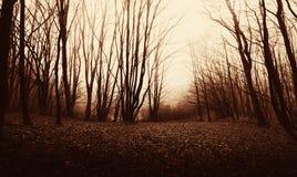Floresta assombrada no por do sol em Dia das Bruxas Fotos de Stock