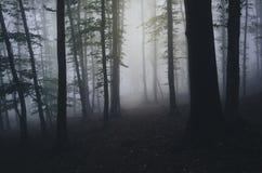 Floresta assombrada obscuridade com névoa na noite Foto de Stock Royalty Free