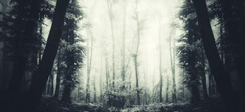 Floresta assombrada surreal com panorama da névoa Foto de Stock Royalty Free
