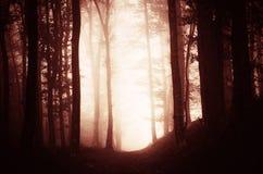 Floresta assombrada surreal do vermelho do pesadelo Fotos de Stock
