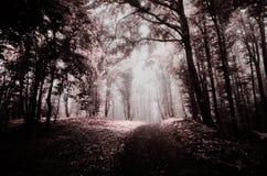 Floresta assombrada surreal na luz infra-vermelha Fotos de Stock Royalty Free