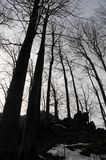 Floresta assustador Foto de Stock