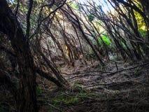 Floresta assustador Imagens de Stock Royalty Free