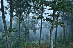 Floresta assustador Fotografia de Stock Royalty Free