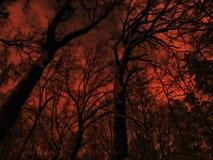 Floresta assustador Fotografia de Stock