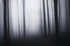 Floresta assustador assustador escura em Dia das Bruxas com névoa Fotos de Stock Royalty Free