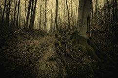 Floresta assustador com a árvore velha gigante com raizes grandes Fotos de Stock