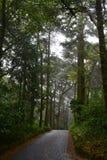 Floresta assustador do Dia das Bruxas na luz da manhã Imagem de Stock Royalty Free