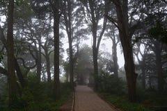 Floresta assustador do Dia das Bruxas na luz da manhã Imagens de Stock Royalty Free