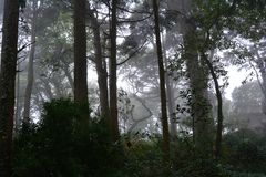 Floresta assustador do Dia das Bruxas na luz da manhã Imagem de Stock