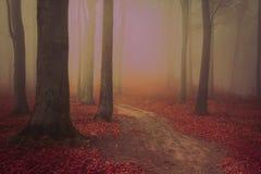 Floresta assustador durante uma névoa estranha do conto de fadas Fotografia de Stock
