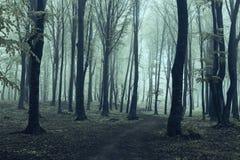 Floresta assustador e névoa de Dia das Bruxas Foto de Stock Royalty Free