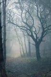 Floresta assustador enevoada imagem de stock