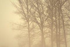 Floresta assustador na névoa Imagens de Stock