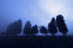 Floresta assustador na noite Fotografia de Stock Royalty Free