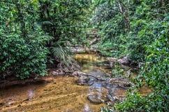 Floresta atlântica Imagem de Stock