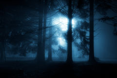 Floresta azul Imagens de Stock Royalty Free