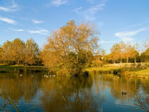 Floresta azul da lagoa Imagens de Stock Royalty Free