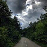 Floresta búlgara Fotografia de Stock