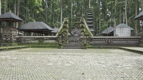 Floresta bali do macaco de Sangeh vídeos de arquivo