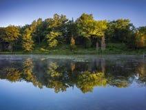 A floresta banhou-se na luz morna do nascer do sol refletida no symmetr perfeito fotos de stock royalty free