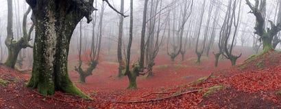Floresta Basque do país Imagem de Stock