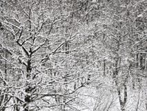 Floresta bloqueado pela neve do carvalho e do vidoeiro no inverno Fotografia de Stock Royalty Free