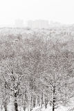 Floresta bloqueado pela neve e cidade no inverno Fotos de Stock
