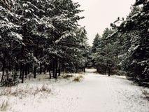 Floresta bonita Fotografia de Stock Royalty Free