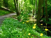 Floresta bonita ao lado de um ribeiro com a floresta de florescência do alho selvagem na primavera imagem de stock