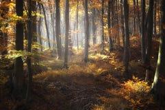 Floresta bonita com as folhas coloridas no outono fotos de stock royalty free