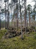 Floresta bonita dentro foto de stock