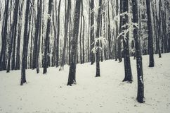 Floresta bonita do inverno com neve e geada Foto de Stock