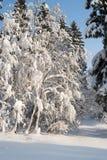 Floresta bonita do inverno no fundo do céu azul Fotografia de Stock