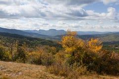 Floresta bonita do outono Fotos de Stock Royalty Free