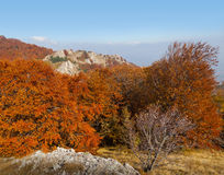 Floresta bonita do outono Imagem de Stock