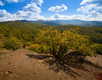 Floresta bonita do outono Fotos de Stock