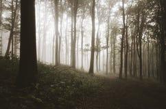 Floresta bonita do outono com névoa Fotos de Stock