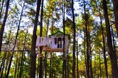 Floresta bonita do pinho em Yogyakarta foto de stock royalty free