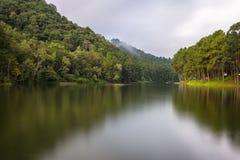 A floresta bonita do reservatório e do pinho no dia nebuloso Foto de Stock Royalty Free