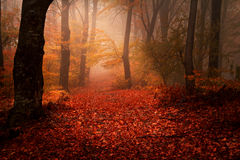Floresta bonita durante o outono Imagens de Stock