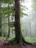 Floresta bonita em Irã Foto de Stock Royalty Free