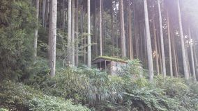 Floresta bonita em Japão Fotos de Stock